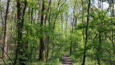 pădurea verde