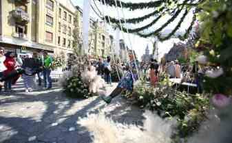 Festivalul Timfloralis