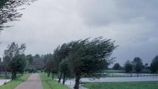 Cod galben de vânt