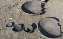 Descoperiri arheologice făcute pe traseul Centurii de Sud Timișoara