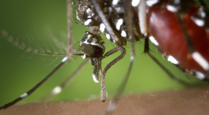West Nile found in person, prompting mosquito-borne illness advisory