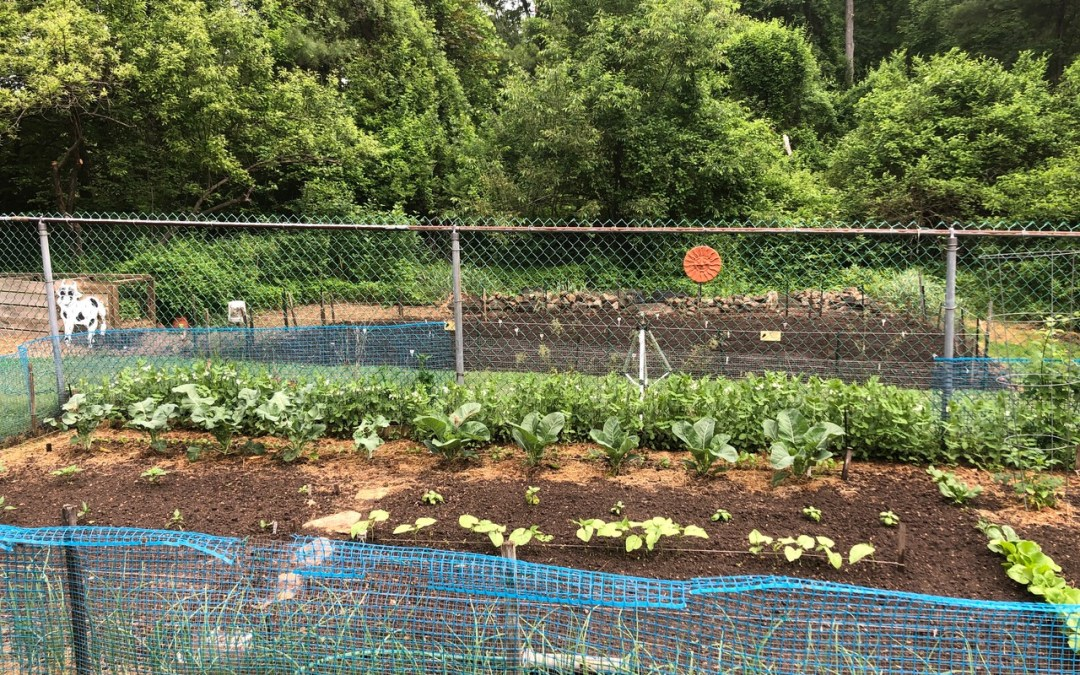 Organic gardening – a labor of love