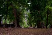 古皇宮外的叢林