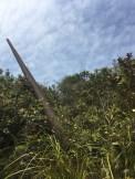 往二峒途中看到二戰時期遺留下來的高射砲