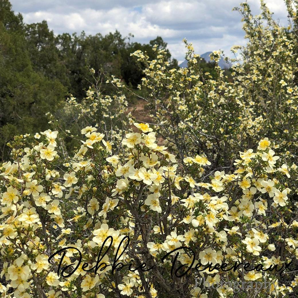 Colorado wildflowers - Image Copyright Debbie Devereaux -