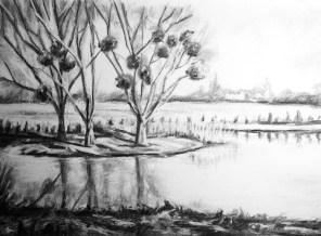 France: mistletoe