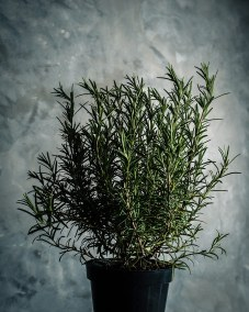 Rosemary-Eucalyptus Stress Spray