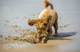Joyful Dog