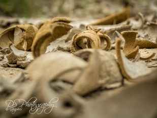 Mud Pit 4