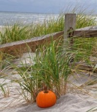 thanksgiving beach pumpkin