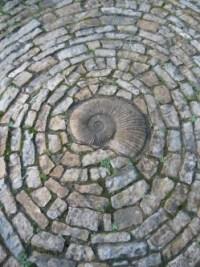 fossil spiral