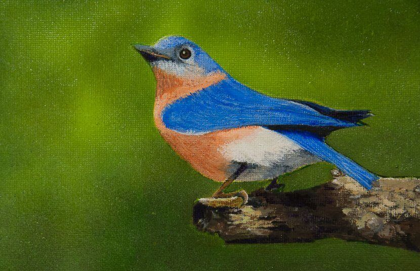 Bluebird At My Window