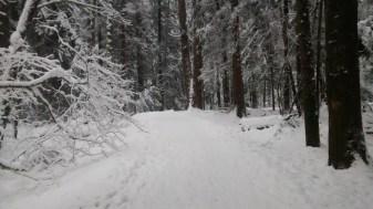 winterwonderland2016_ii