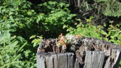Even the fence posts are pretty