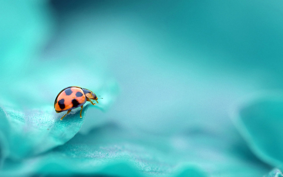 625750__ladybug-insect-turquoise-color-background_p