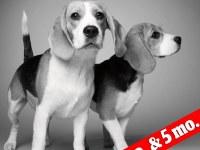 """Mira estas fotos del paso de los años en los perros: Desde el  """"entonces"""" y  el """"ahora"""""""
