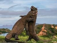 """Las fotografías finalistas del prestigioso """"Wildlife Photographer of the Year"""""""