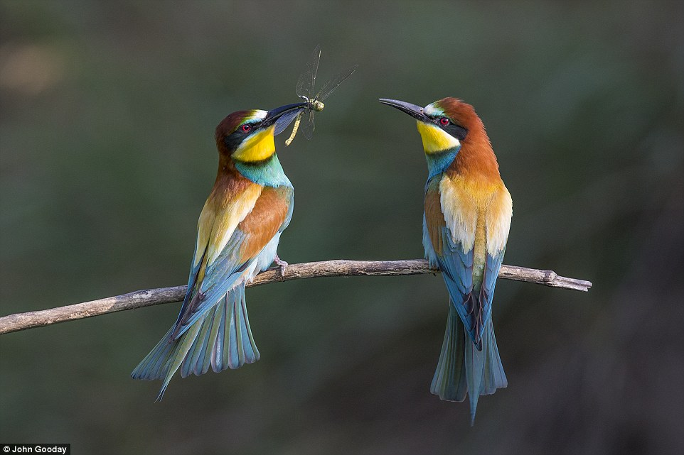 2C96C76B00000578-3243126-Adult_winner_of_The_Birds_and_the_Bees_category_A_present_for_my-a-8_1442831840345