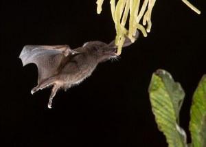 Las fotografías ganadoras del prestigioso concurso de vida animal que entrega La Sociedad Zoológica de Londres