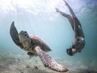 Mira estas fotografías realizadas por buceadores de espectaculares primeros planos de delfines, tiburones y ballenas