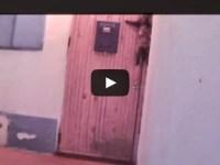 Increíble, este gato cuando quiere entrar en casa llama al timbre