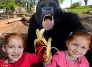 Estos animales no fueron invitados a unirse a la fiesta.  No te pierdas los más espectaculares photobombs