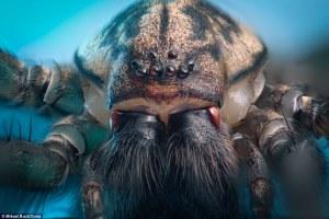 Las bestias que acechan en su hogar: detalles de insectos capturados en primer plano