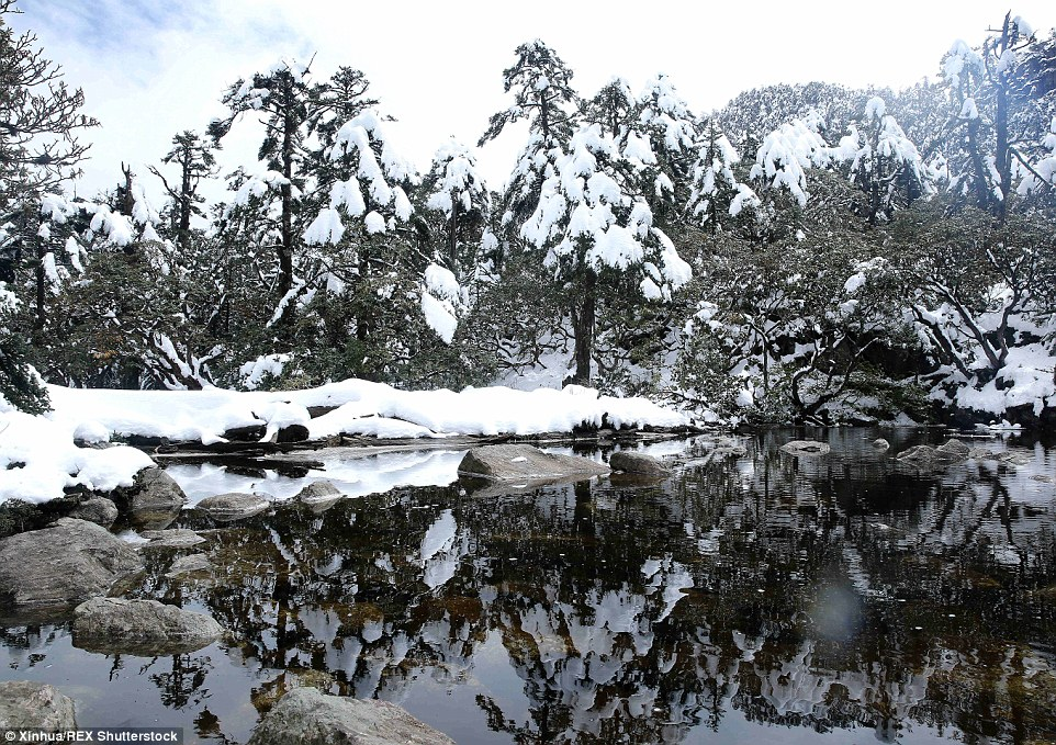2ED33A1B00000578-3335083-Magical_The_scenery_on_Luoji_Mountain_after_a_heavy_snow_in_Puge-a-21_1448552590744