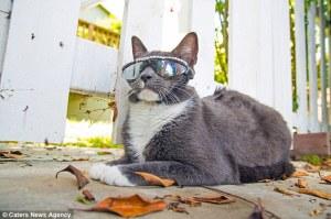 Conoce por qué este gato se ha convertido en estrella de los medios sociales