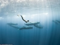 Nadando entre ballenas azules