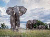 Nuevo libro del fotógrafo Will Burrard-Lucas nos muestra otra forma de ver a los animales en su hábitat  natural