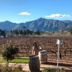 Franschhoek Wine Tram: passeio de trem pelas vinícolas da África do Sul