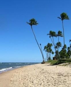 Translado Aeroporto de Salvador – Hotéis e Pousadas em Praia do Forte