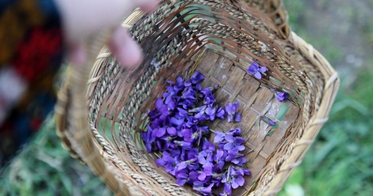 Le sucre de violettes