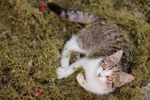 cat-690782_1280