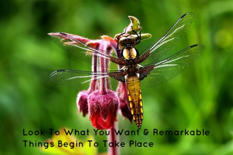 look-to-what-you-want-remarkable-things-begin-to-take-place