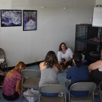 Deborah Hansen, CFMG, CFCG teaching a Creative Cat Grooming Workshop
