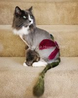Dragonfly, by Deborah Hansen, CFMG, CFCG, creative cat grooming