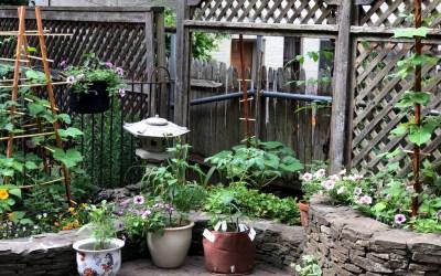 A Garden of Hope Grows in Brooklyn