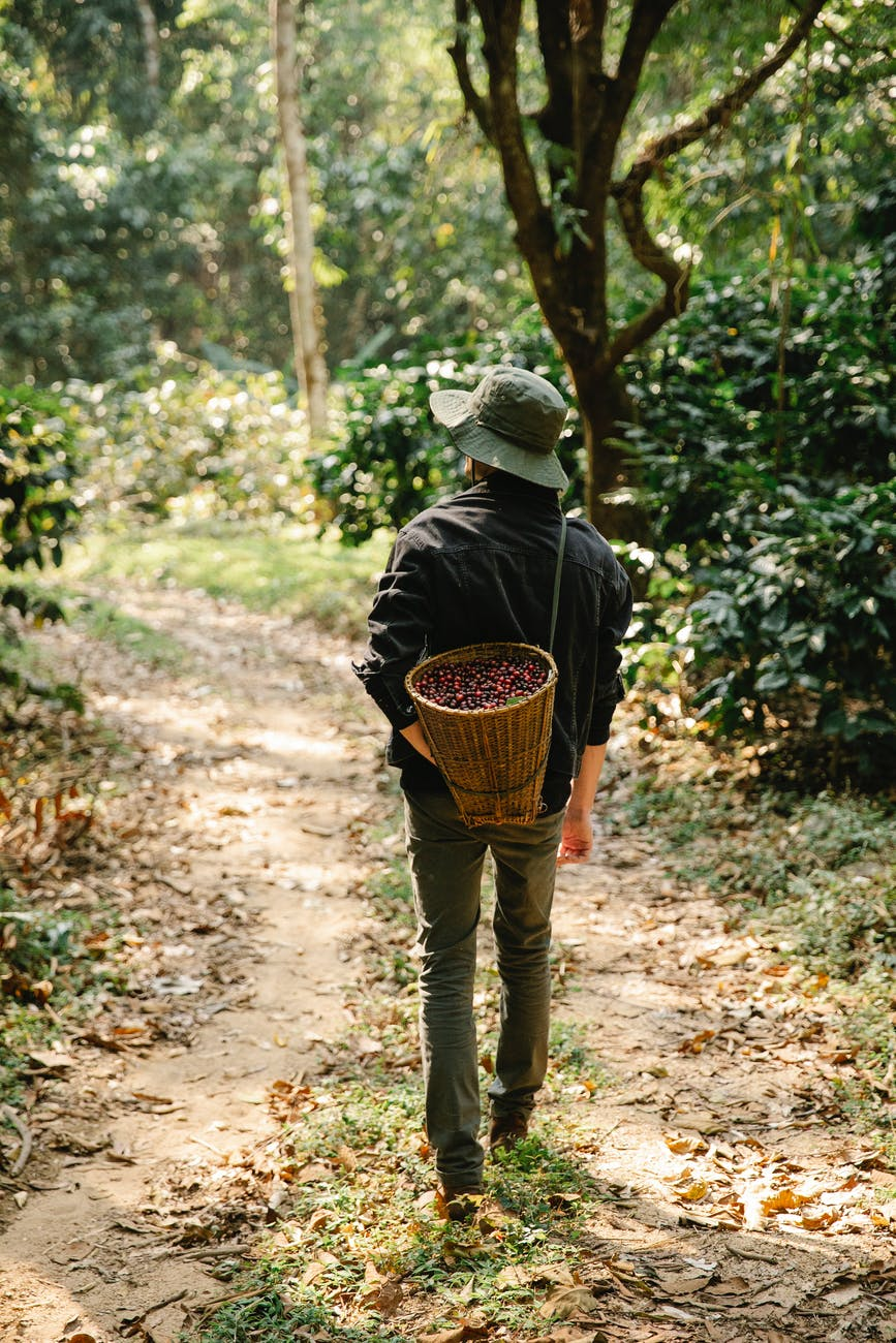 unrecognizable male farmer walking in forest after harvesting berries