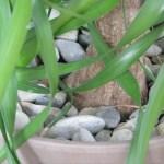 Palme mit Steinen