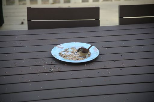 Bird in a Plate of Seeds