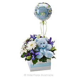 ITS A BOY Flower box with a teddy bear and balloon AUS 748