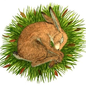 Nesting Hare
