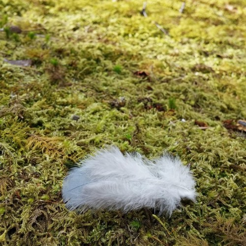 feather on moss
