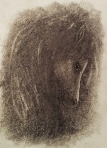 wild pony drawing