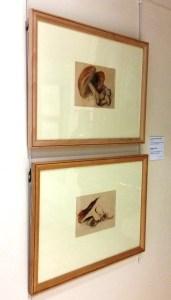 Perth Museum - Beatrix Potter Botanical Art