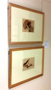 Perth Museum - Beatrix Potter Botanical Art