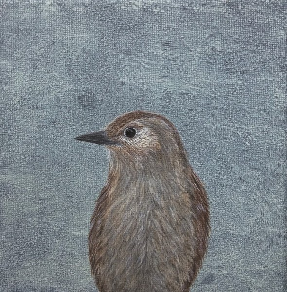 Dunnock fledgling painting