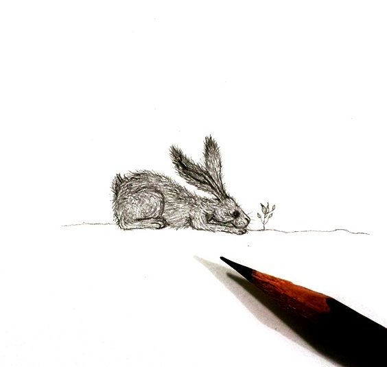 Small hare drawing